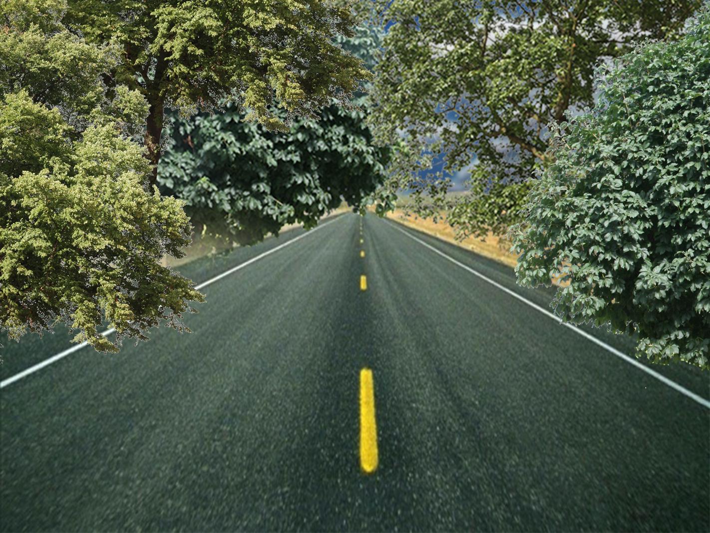 trees n roadway_1544467826203.jpg.jpg