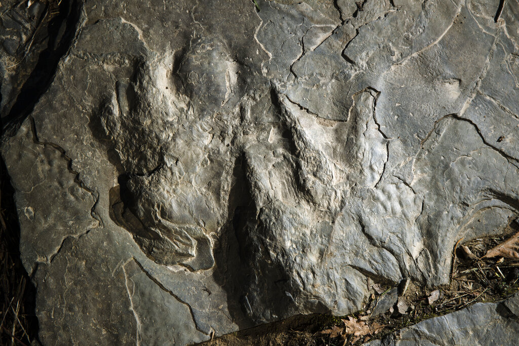 Dinosaur Tracks-Valley Forge_1551905968803