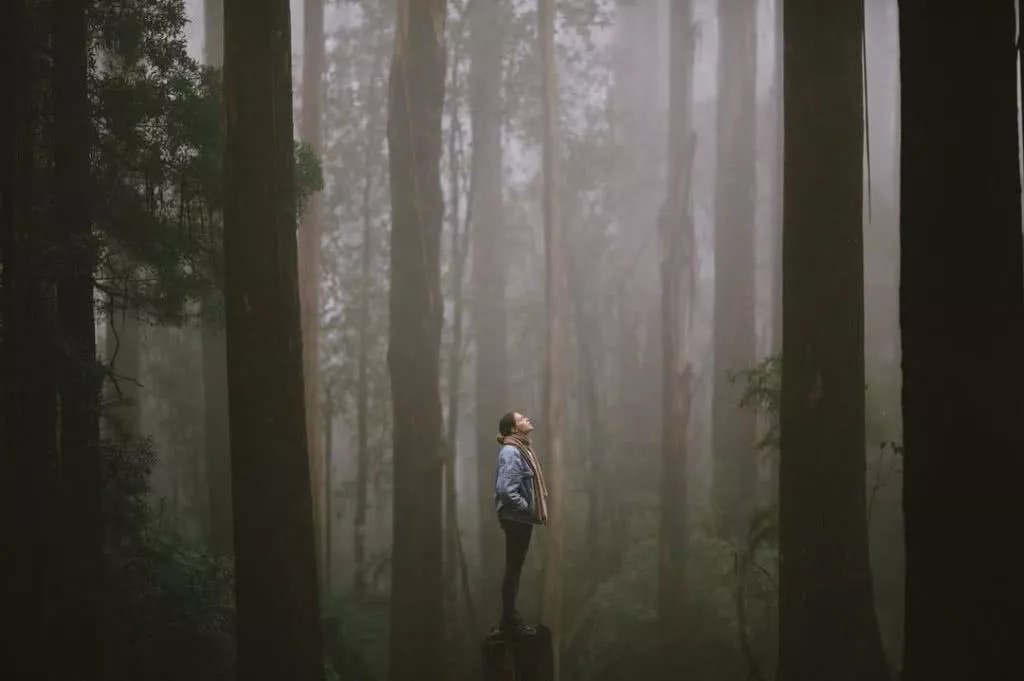"""Microadventures with @jarradseng 4/5 """"Another one from Victoria's forests out Dandenong way, with @ameliesatzgerphotography all the way from Germany."""" #weareexplorers"""