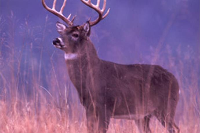 DNR seeks input about hunting in state parks_3806474772065830381