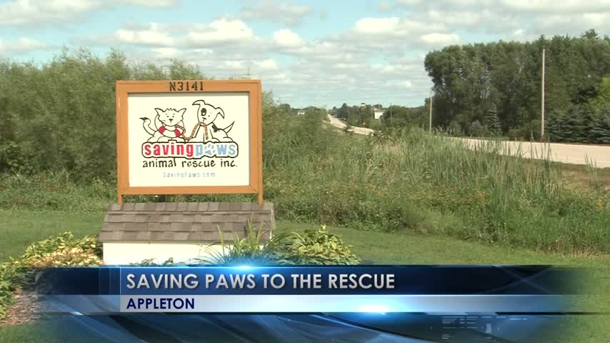 Local Shelter Saves Texas Dogs