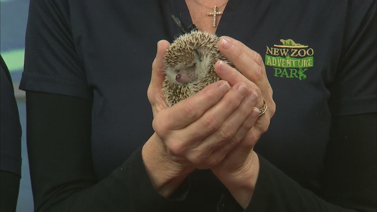NEW Zoo Winter admission