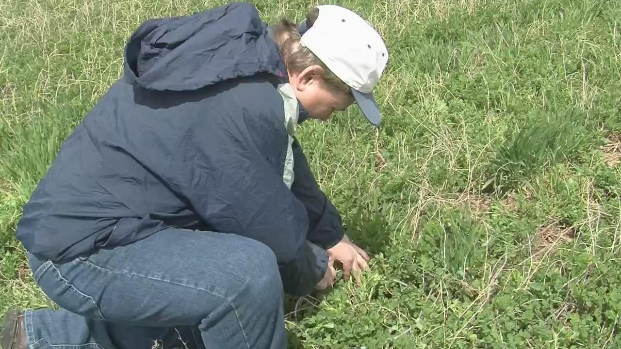 Midwest Farm Weekly: Alfalfa Status
