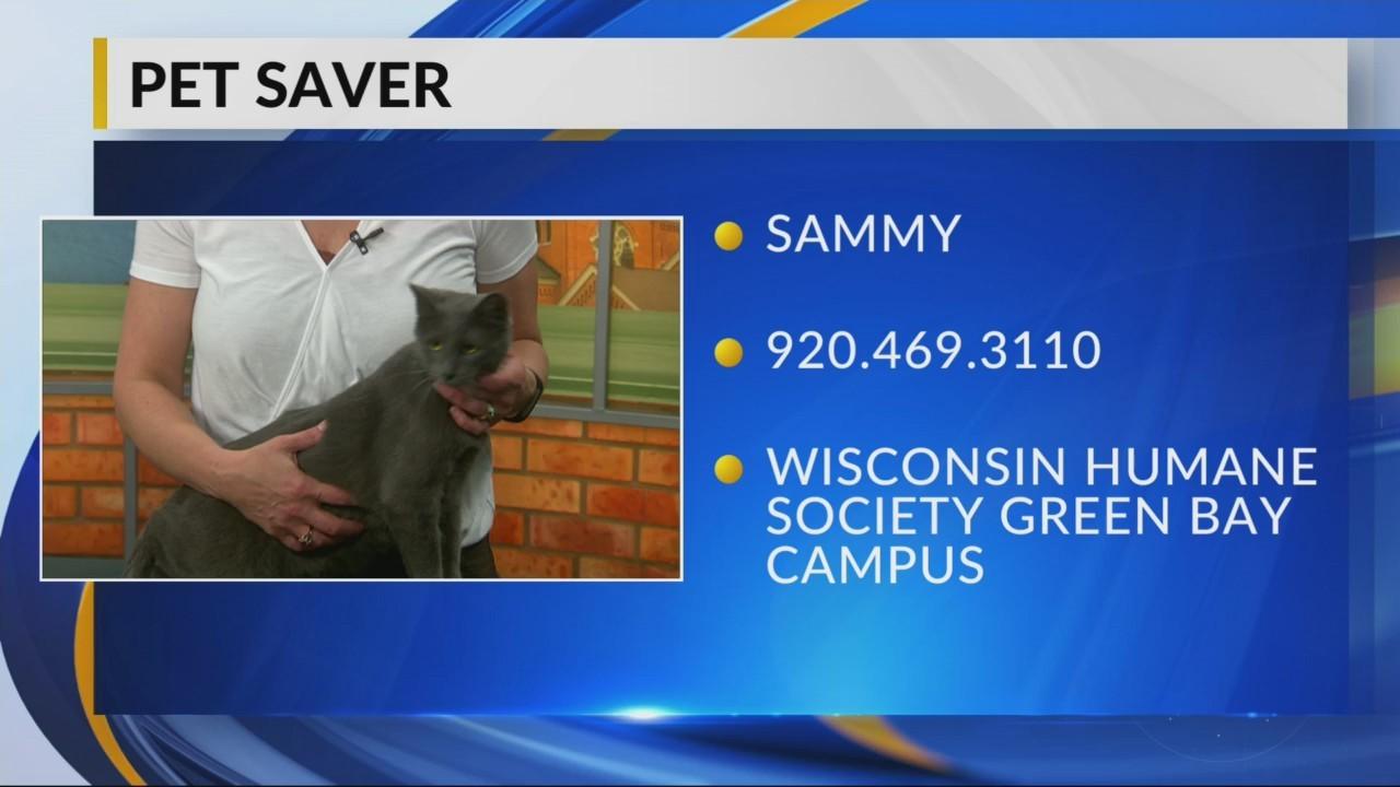 Petsaver: Sammy
