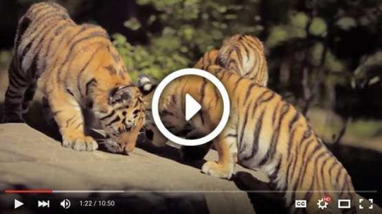 Grades K-2: Keep Wild Animals Wild - Video