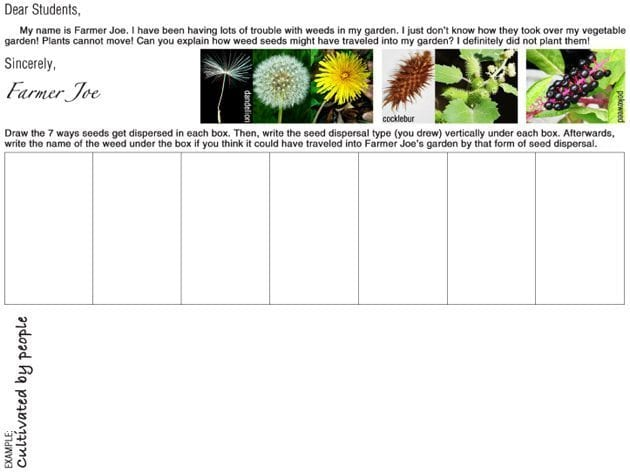 learning about seeds in third grade with free printables weareteachers. Black Bedroom Furniture Sets. Home Design Ideas
