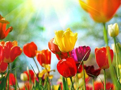 Flowers of spring