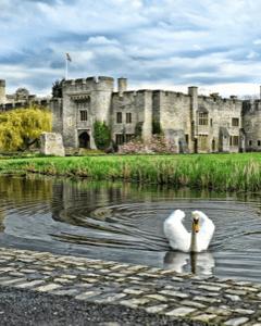 Allington castle - Charity Fundraiser (F)