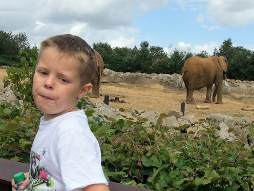 3-kyler-elephant