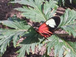 butterfly-world0037