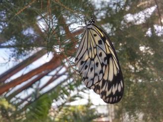 butterfly-world0040
