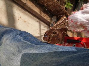 butterfly-world0088