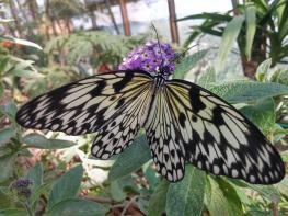 butterfly-world0120