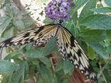butterfly-world0121