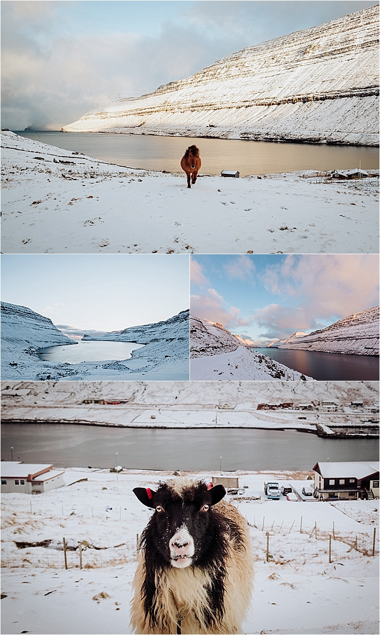 The fjords and animals of the Faroe Islands by We Are The Wanderers