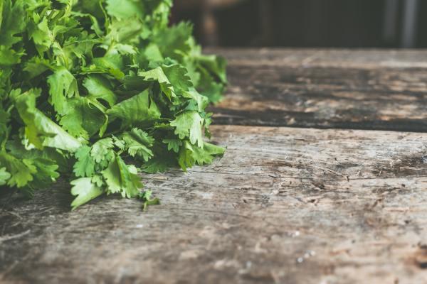 Pexels herb garden stock image