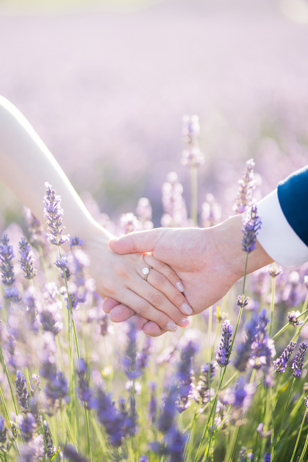 Ceremony in the Lavender Fields, Commitment Ceremony in the Lavender Fields