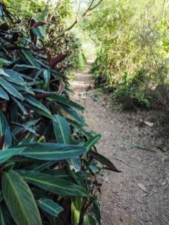 pad Elephant Mountain Trail
