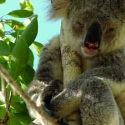 Reizen australie