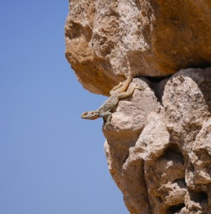 Amman wandelen bij citadel ruines bezienswaardigheid