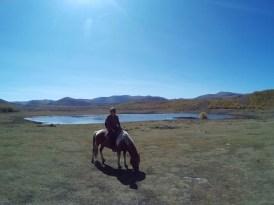 paarden mongolie noord azie backpacken