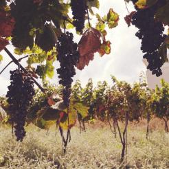 Bijzonder overnachten wijngaarden belvilla kreta