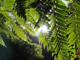 Caldeira Velha azoren bomen