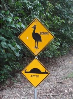 Casuarissen australische dieren