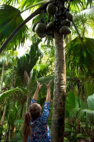 Coco de Mer Vallee de Mai praslin seychellen-2