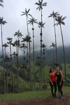 Cocora de valley colombia