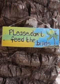 Curcao please don't feed the birds