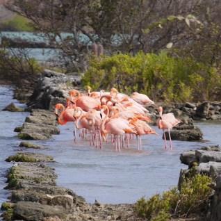 Flamingo's jan kock landhuis