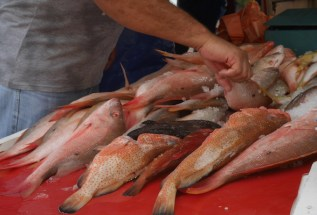 Floating market fish willemstad curacao