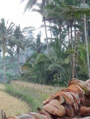 Gunung Kawi Uitzicht