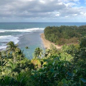 Hawaii palmbomen eilanden