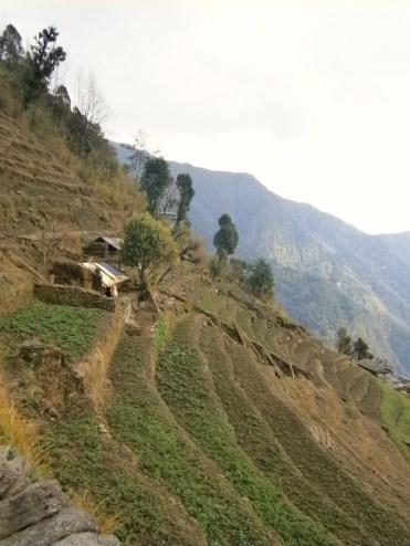 Himalaya trekking nepal voor de boomgrens