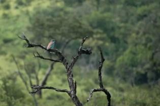 Hluhluwe zuid afrika vogeltjes