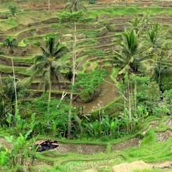 Rondreis Indonesie