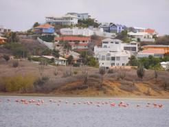 Jan thiel flamingo's