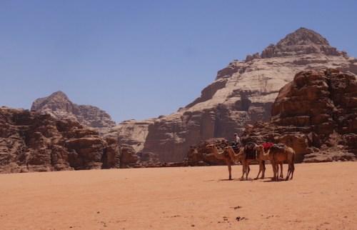 Kamelen wadi rum woestijn