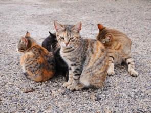 Katten cavagrande sicilie oostkust