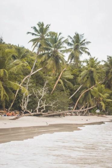 Mahe vakantie palmbomenstrand Surfers Beach Seychellen