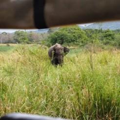 Minneriya-National-Park-olifant-vanuit-jeep