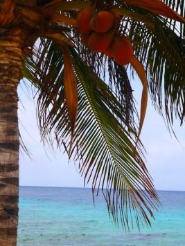 Mooiste stranden curacao jan thiel