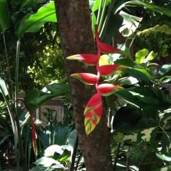 Natuur Jamaica