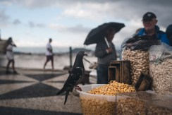 Nazare marktkraampje portugal boulevard 24