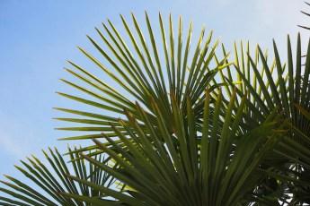 Palmbomen portugal