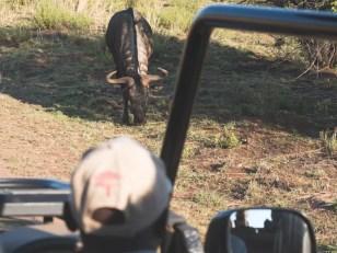 PIlanesberg-Zuid-Afrika