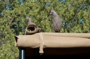 PIlanesberg Zuid Afrika vogels