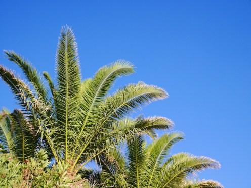 Palmbomen op Kreta
